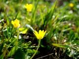 Jarní Labe