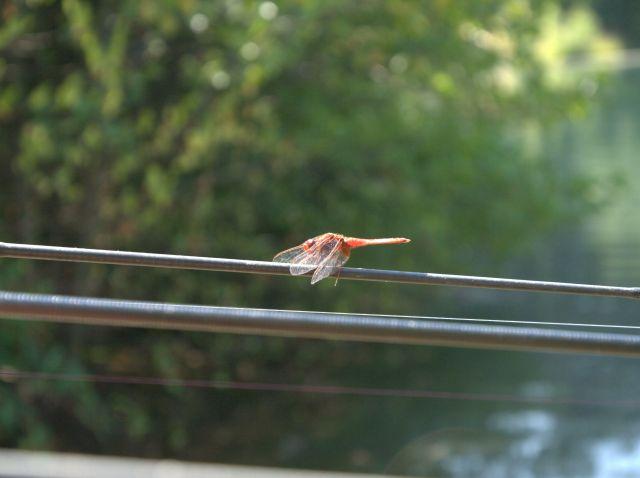 Detail fotografie - Jiné, Pardubický kraj